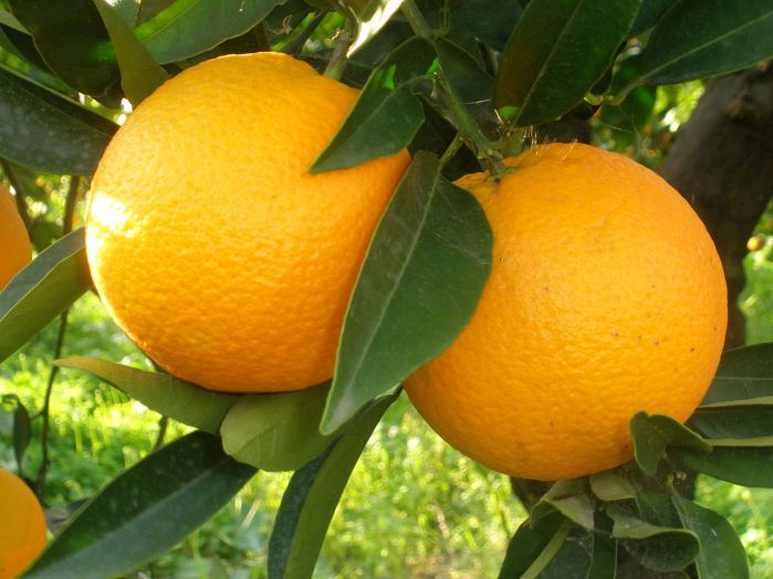 Naranja en la Rivera por Figiu
